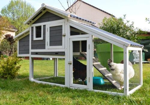 Build a Backyard Chicken Coop